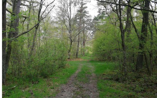 Course solidaire : balade en vélo en forêt